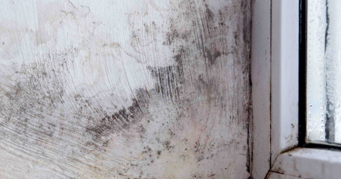 Toxic Mold: From Suspicions to Solutions